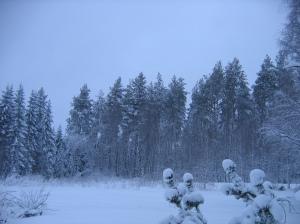 Blue Finland